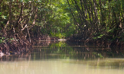 Vietnam approves US$9 billion project within mangrove reserve