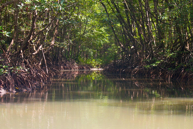 Can Gio mangrove vietnam