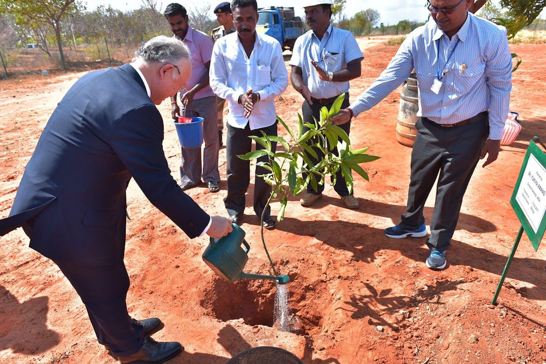 tree planting india