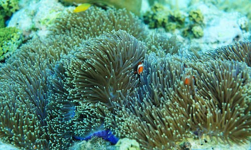 Popular opposition suspends a bridge project in a Philippine coral haven