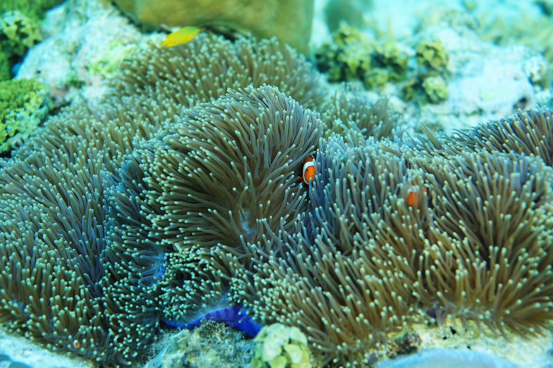 coral reefs of Coron, Palawan