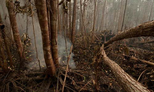 Will a new Indonesian law make it harder to punish firms for haze-causing fire?