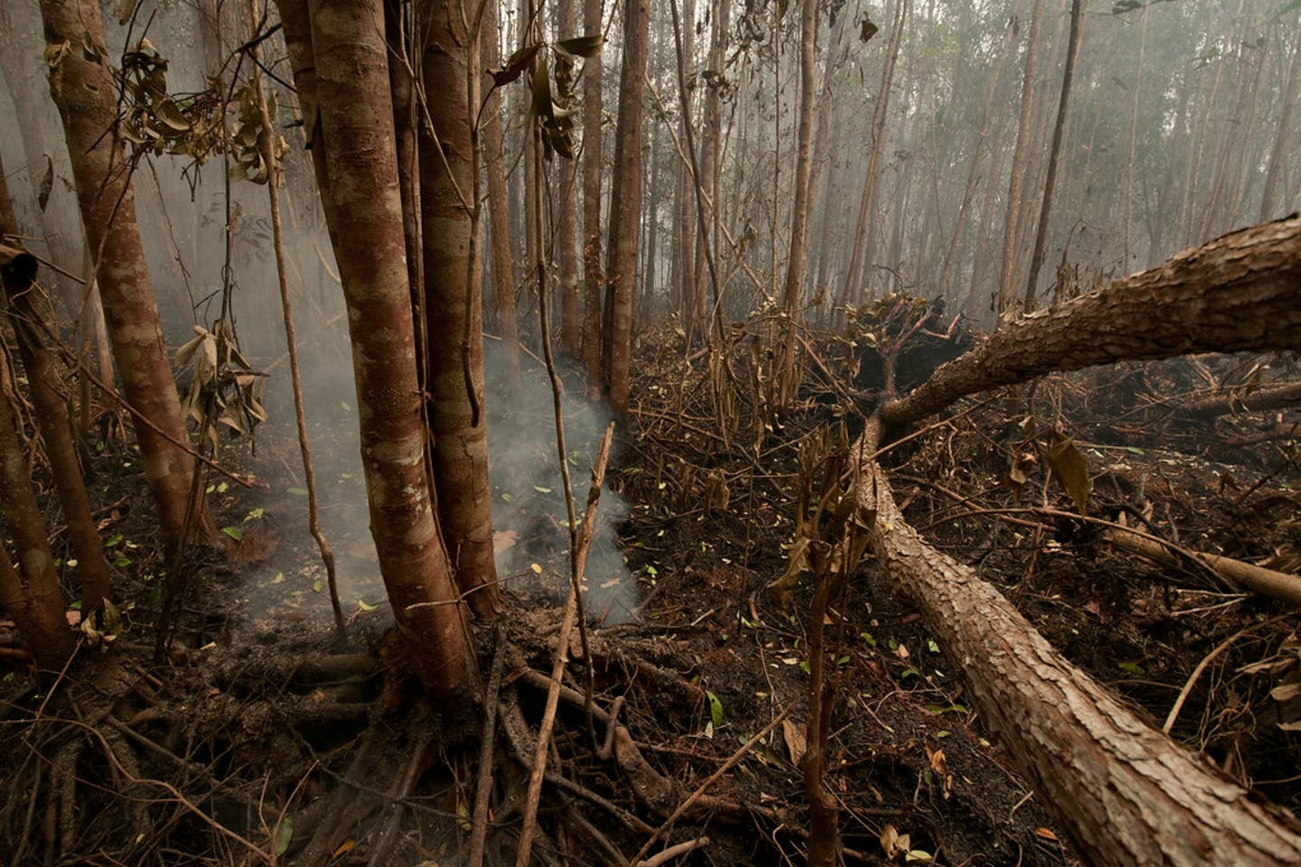 Peat burns in the Tumbang Nusa research forest outside Palangka Raya, Central Kalimantan in Indonesia