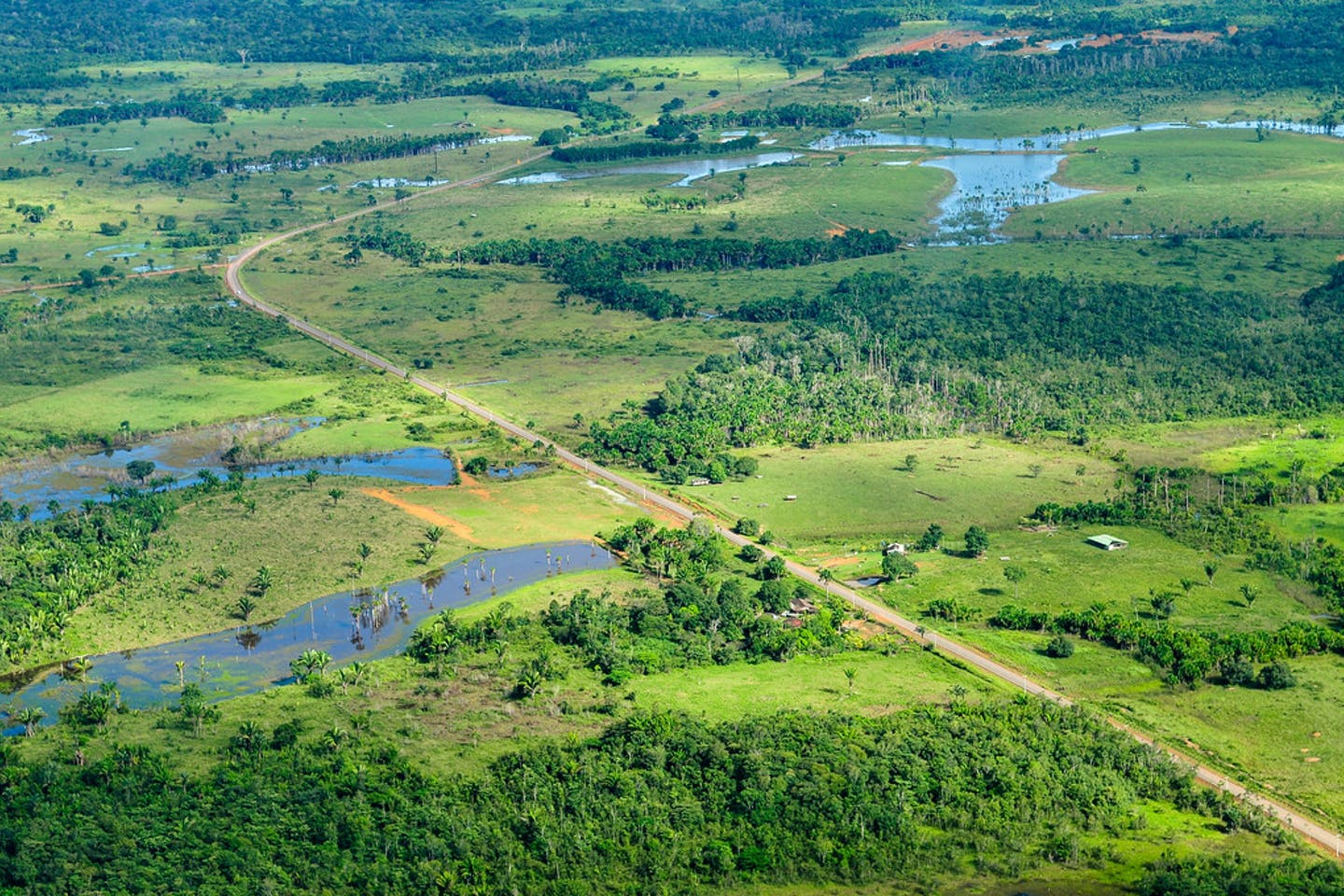 Amazon rainforest near Manaus