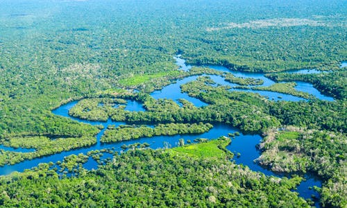 Only intact forests can stave off climate change