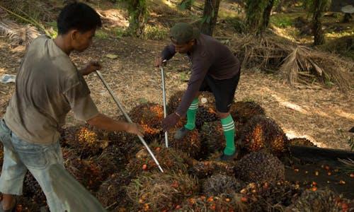 Coronavirus thumps palm oil demand