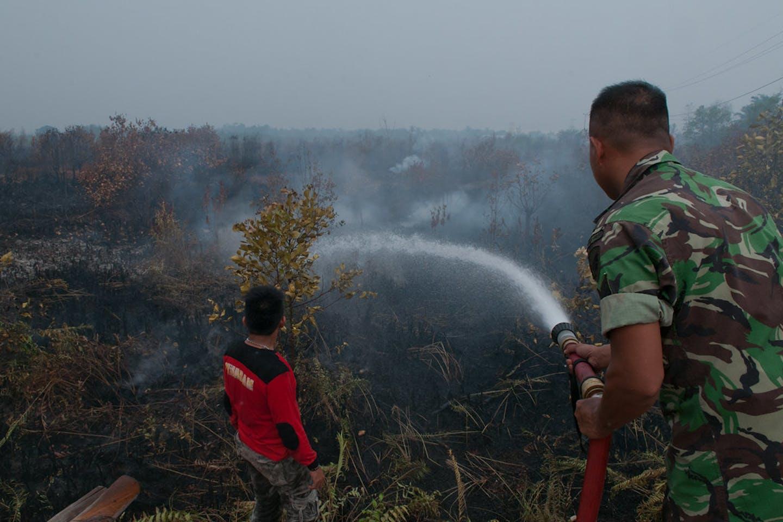 indonesia peat