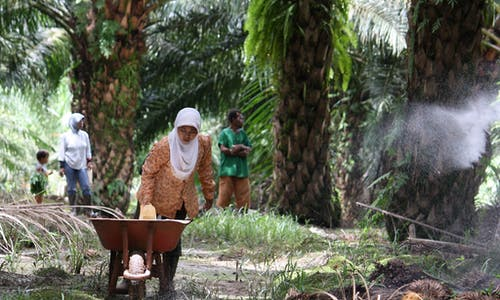 Palm oil giant Korindo accused anew of illegally burning Papuan rainforest