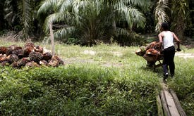 Upgrade of Indonesian palm oil certification falls short, groups say