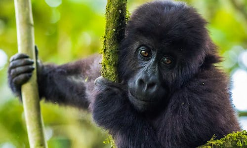 Advocates raise fears over proposal to reopen DRC forests to loggers