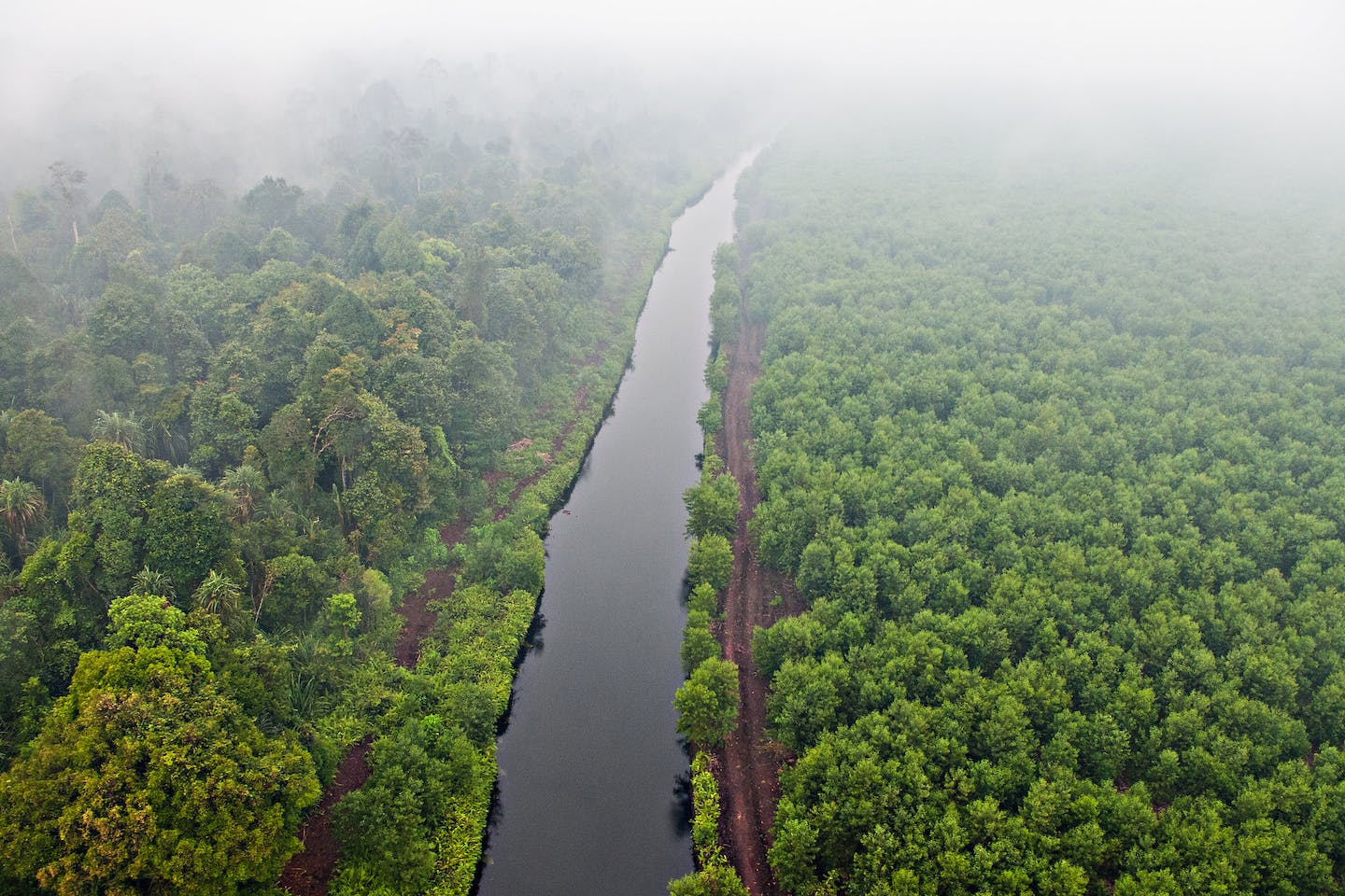 Haze air pollution from burning peatlands blankets the landscape in Riau