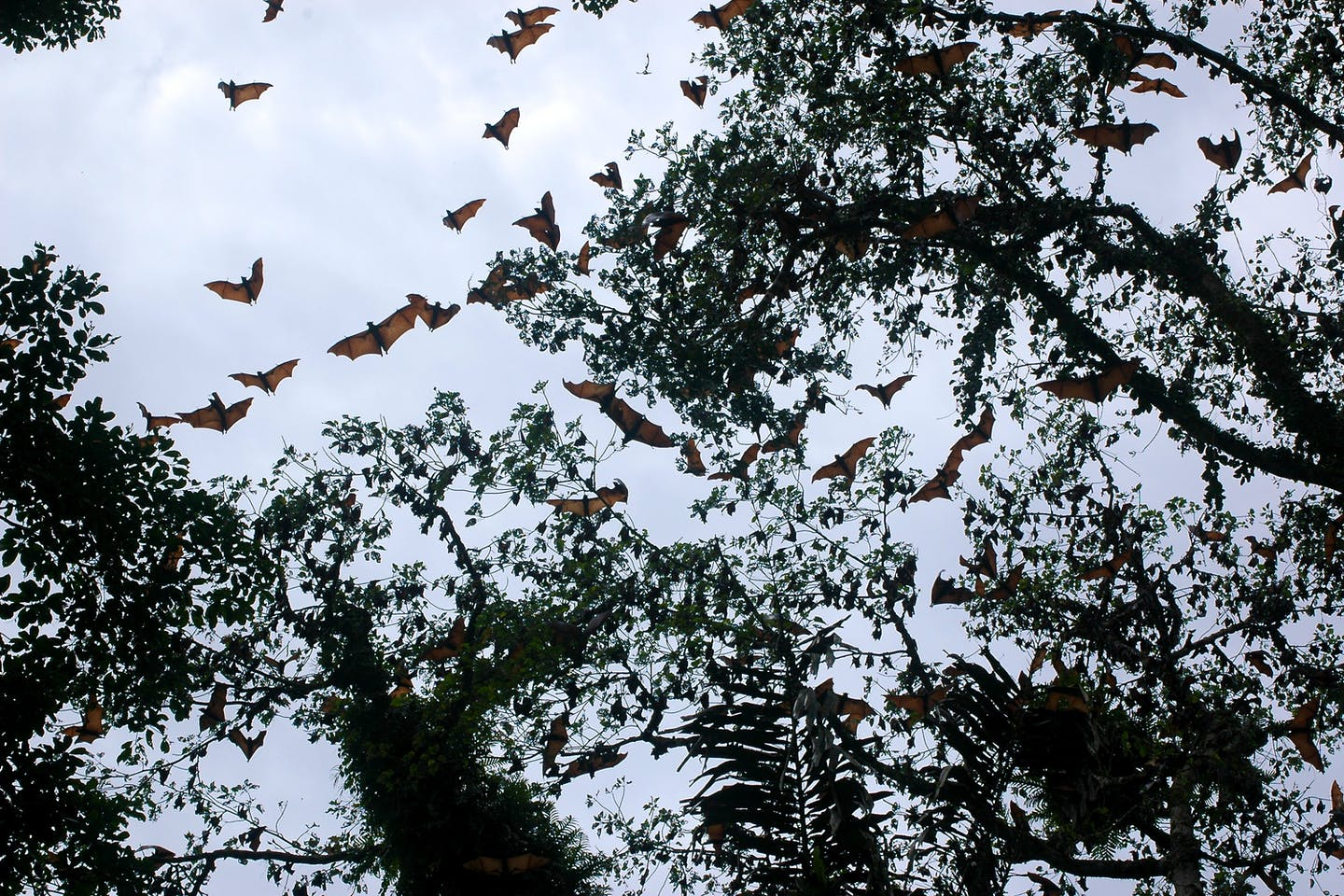 Scientists sceptical of new bat study linking climate change to Covid-19 emergence