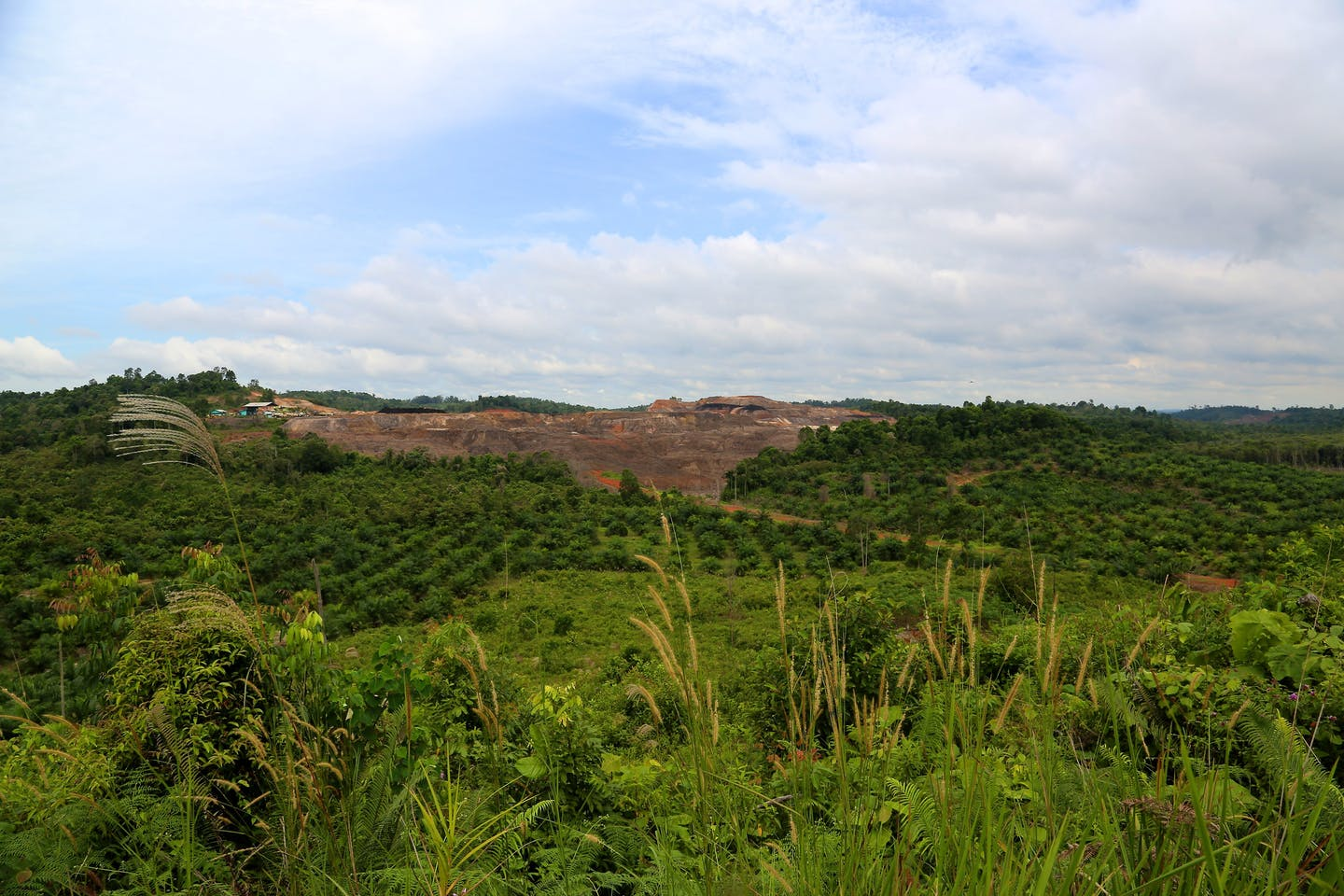 deforested area for palm oil in Kalimantan