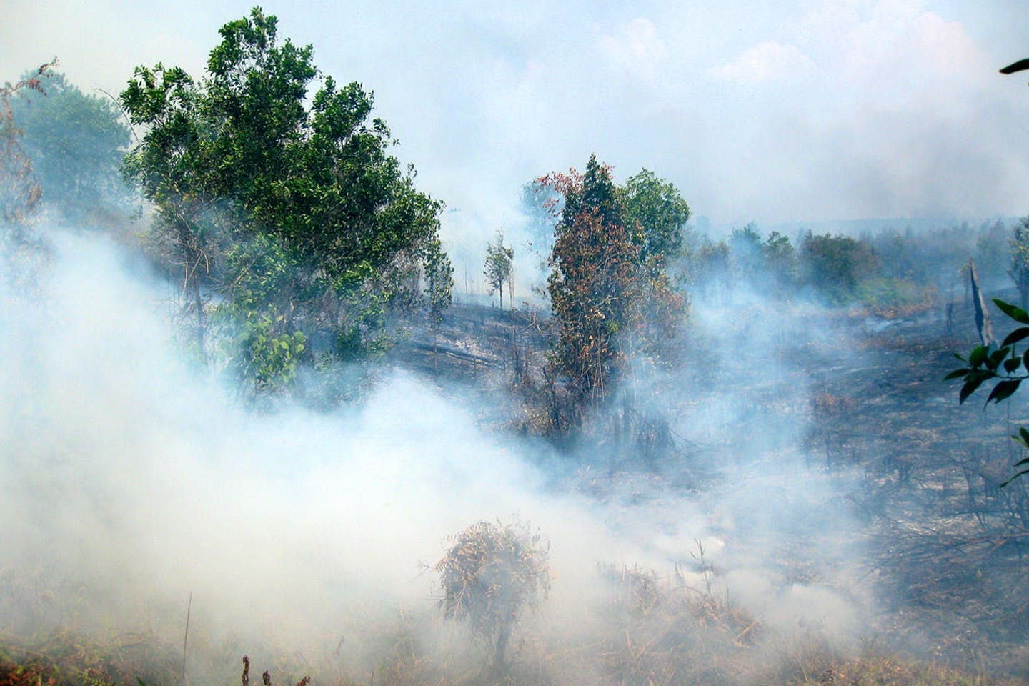 indonesia forest fire3