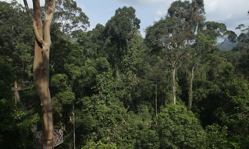 Monitoring deforestation: the use and misuse of satellite technology