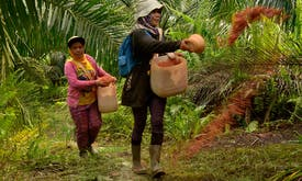 Will Indonesia end smallholder guarantee meant to empower palm oil farmers?