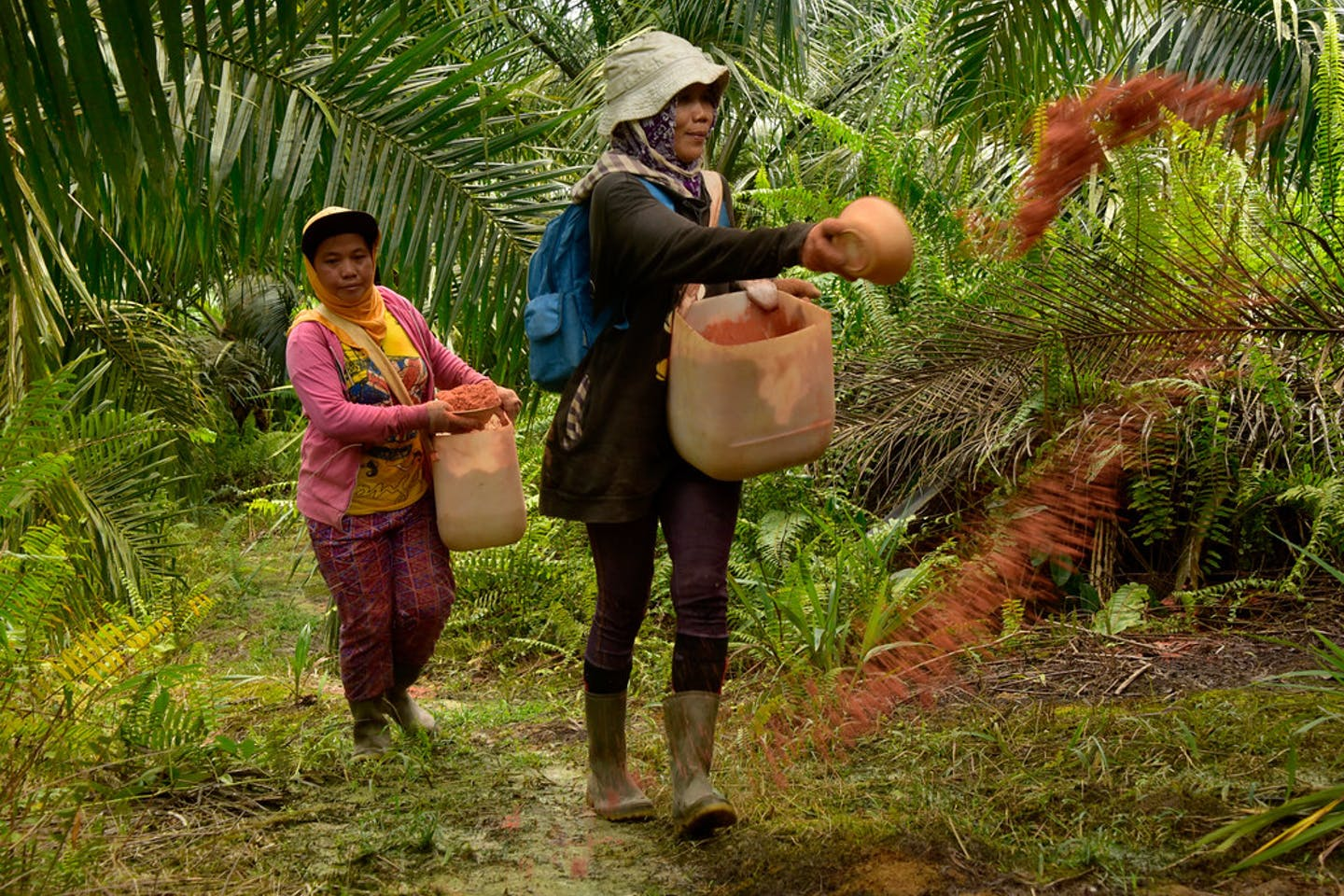 palm oil indonesia8