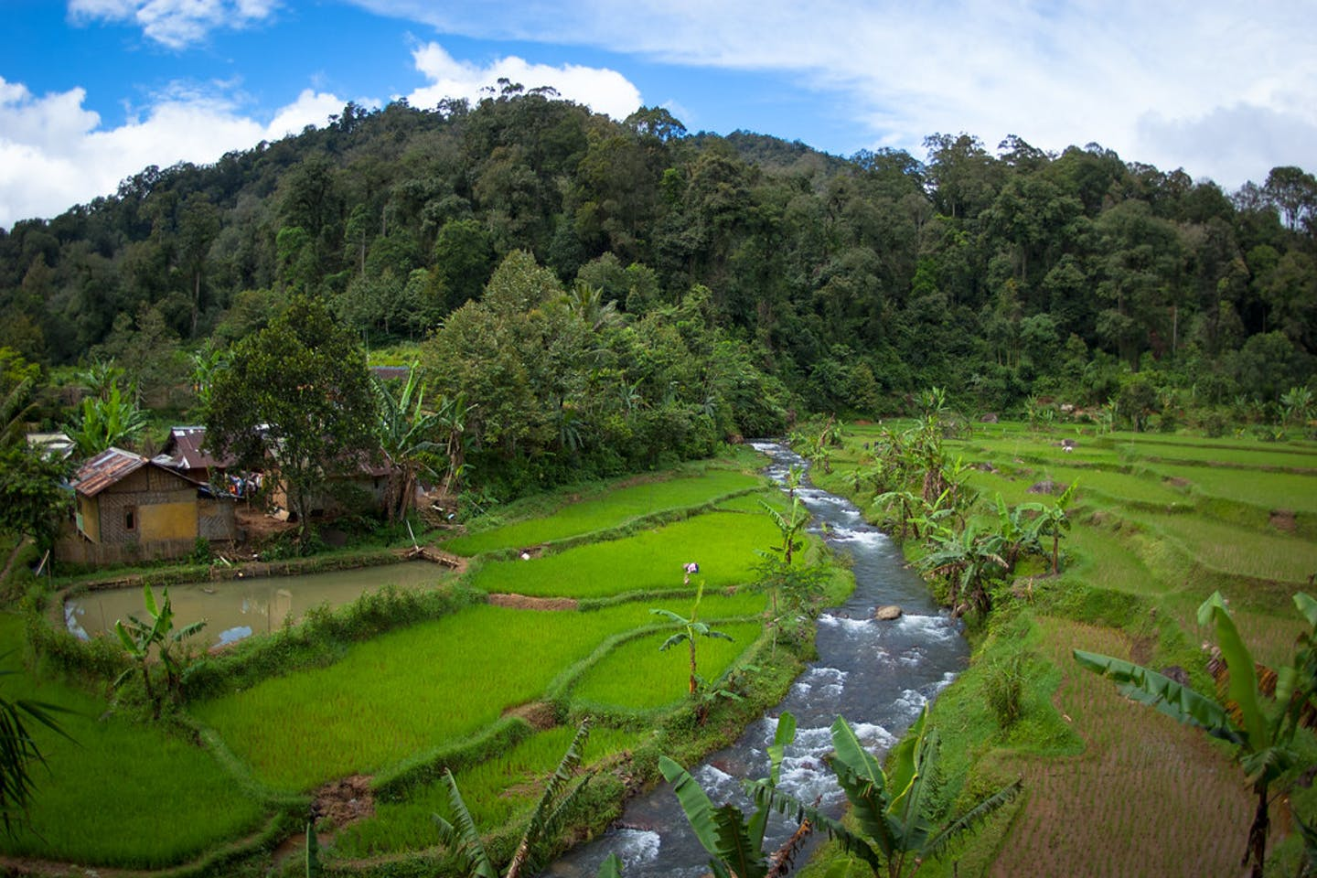 indonesian conservation area