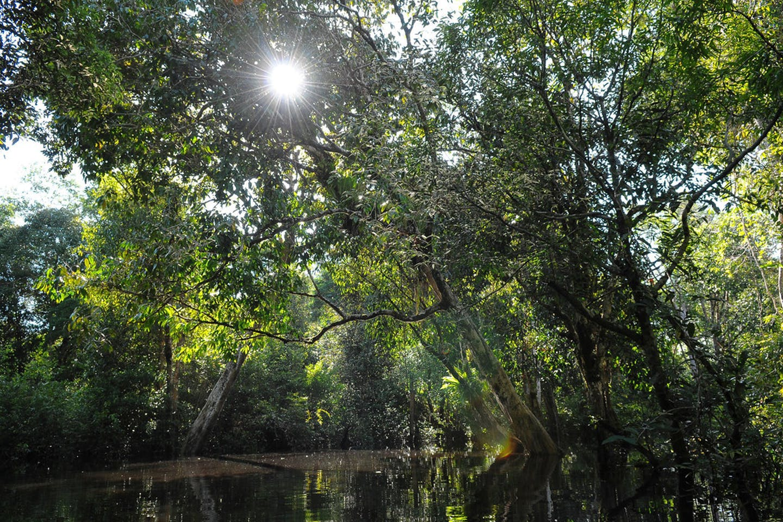 rainforest in Lake Sentarum National Park in West Kalimantan, Indonesia