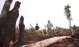 Are BlackRock and other asset managers enabling deforestation?