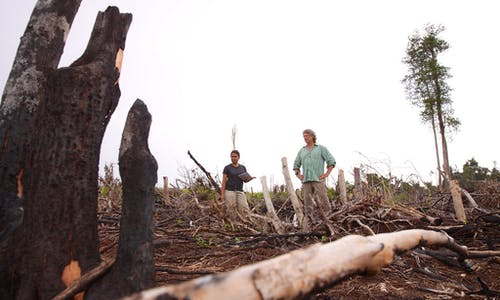 Are BlackRock and other asset managers enabling deforestation?
