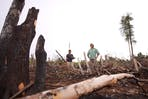 deforestation kalimantan indonesia5