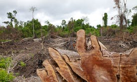 Seas and forests are muddying the carbon budget
