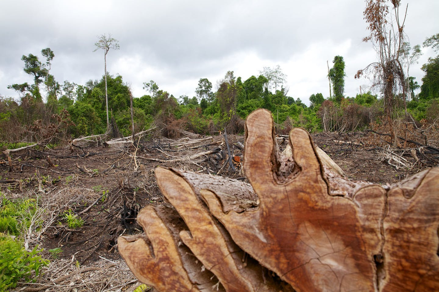 Cleared land in Central Kalimantan, Indonesia