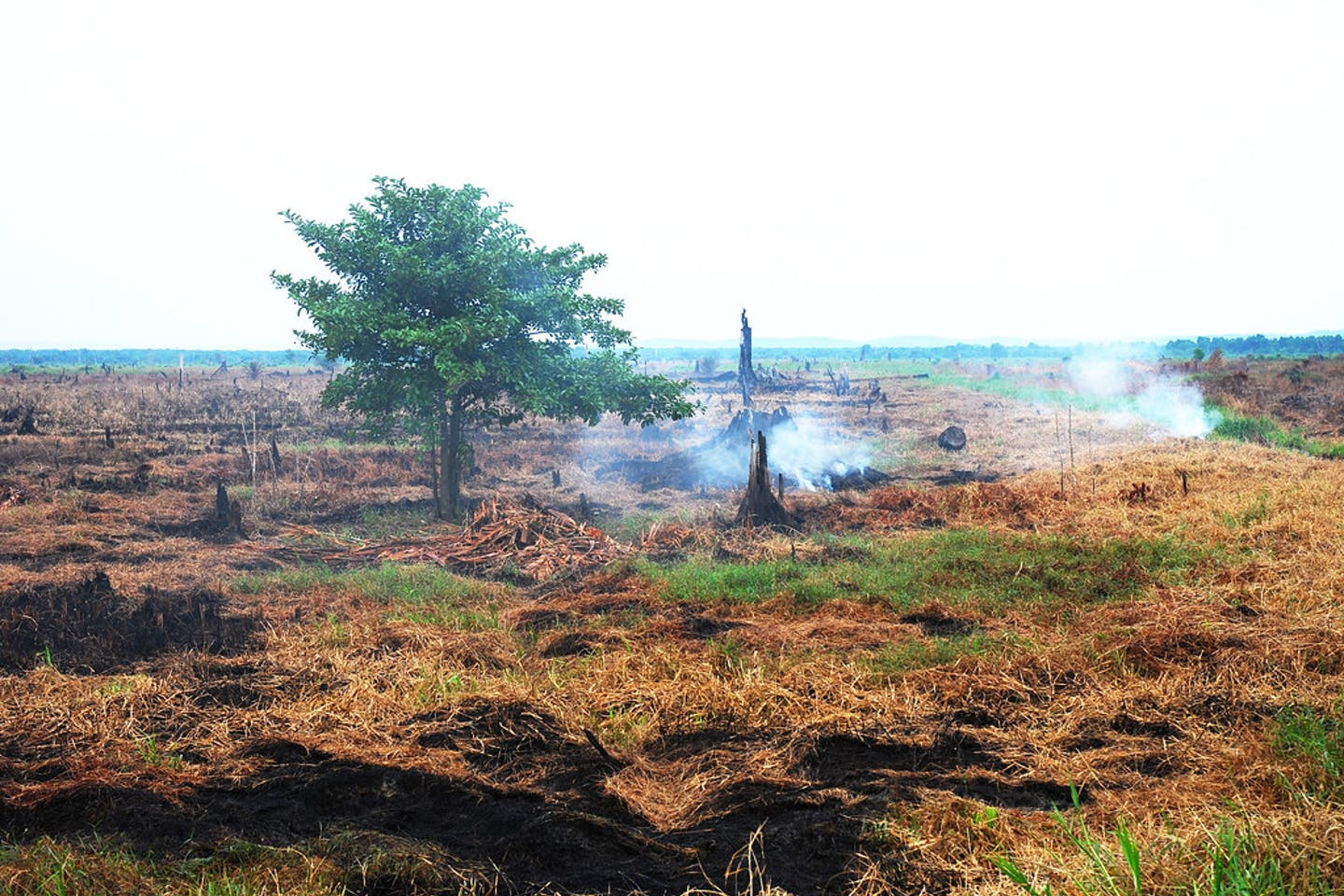 deforestation indonesia3