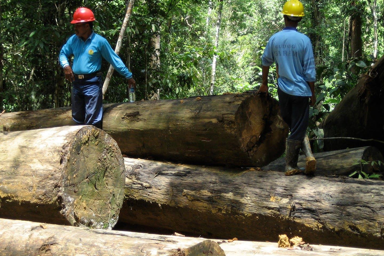 logging east kalimantan indonesia