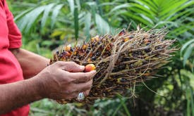 Long road ahead for ethical palm oil in booming Indian market