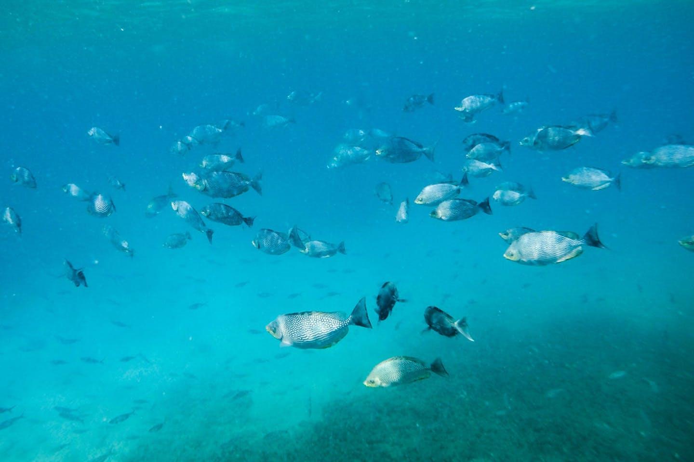 sri lanka marine life