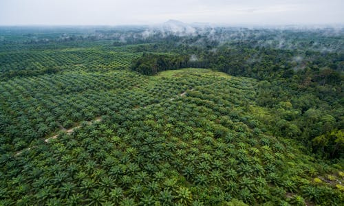Why the palm oil industry needs targets for nature