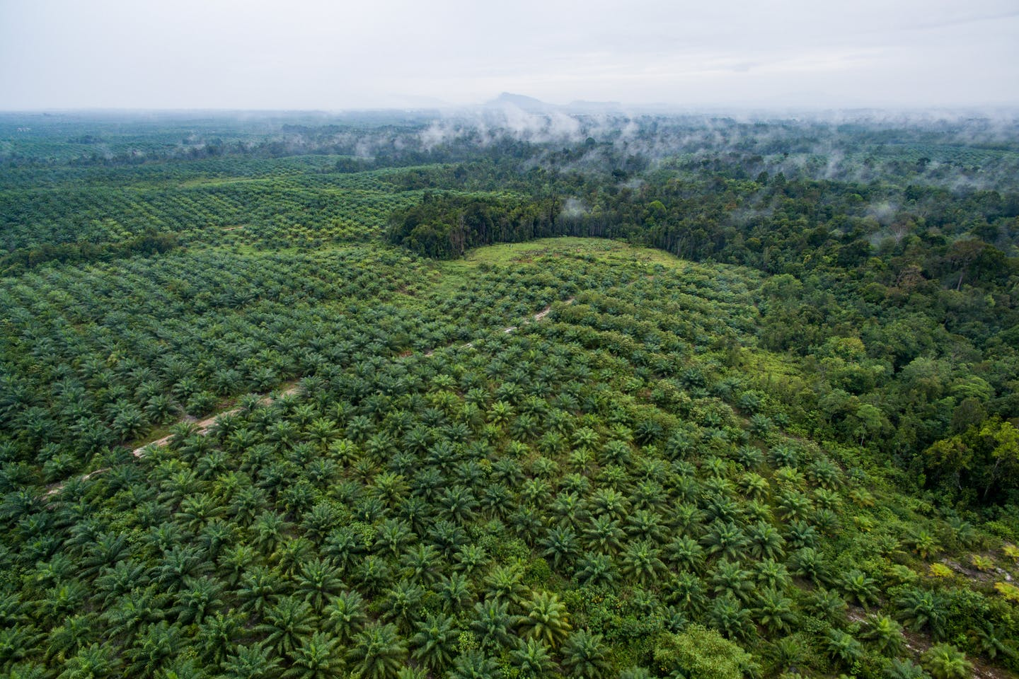 aerial view of palm oil plantations