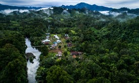 Global rainforest loss 'relentless' in 2020, but Southeast Asia offers hope