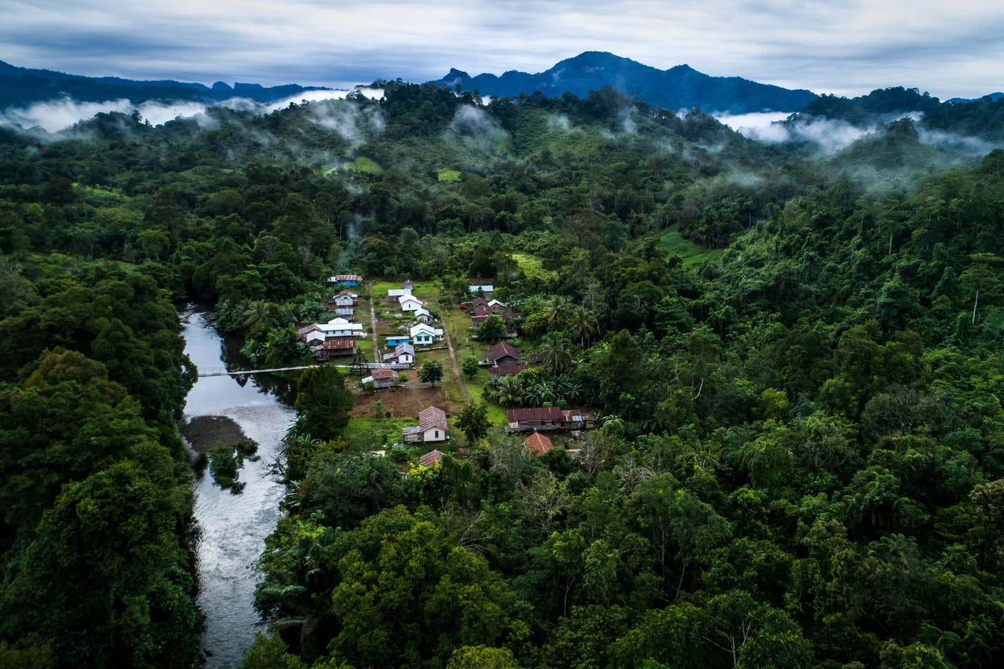 Global rainforest loss 'relentless' in 2020, but SE Asia offers hope