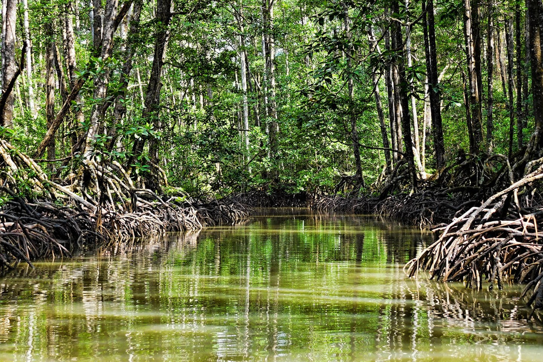 Mangrove Puerto Princesa, Palawan