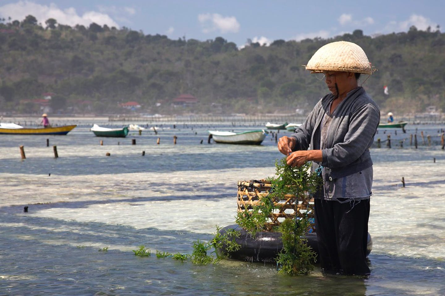 seaweed farming indonesia