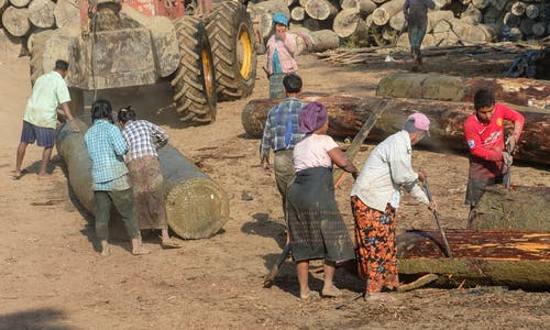 Myanmar's problematic forestry sector seeks global endorsement after coup