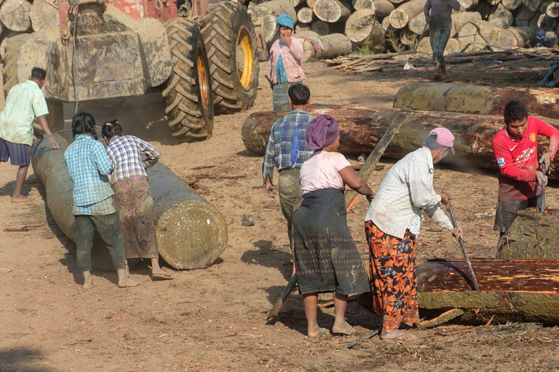 logging operations in Myanmar