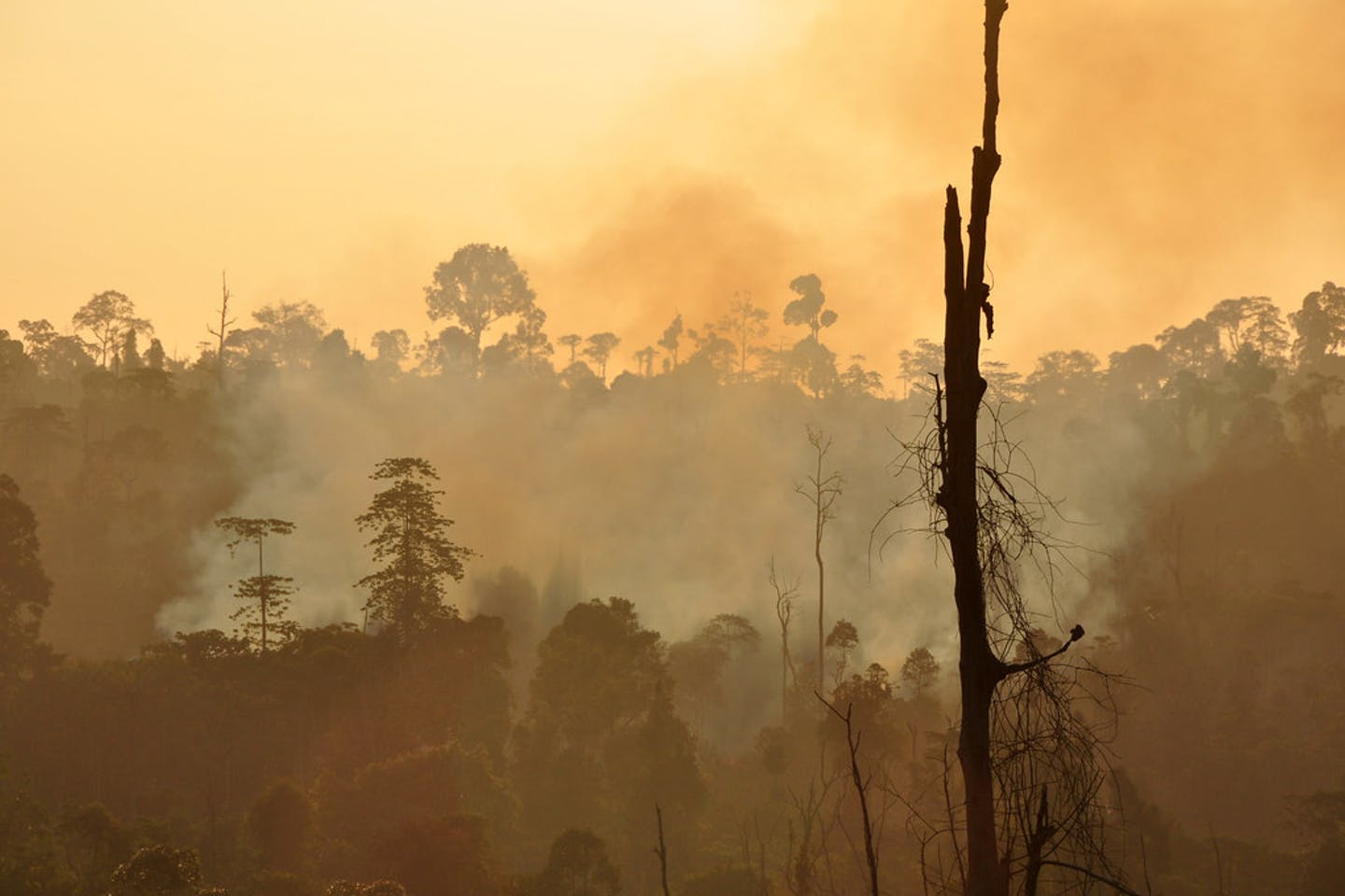 forest fire east kalimantan indonesia