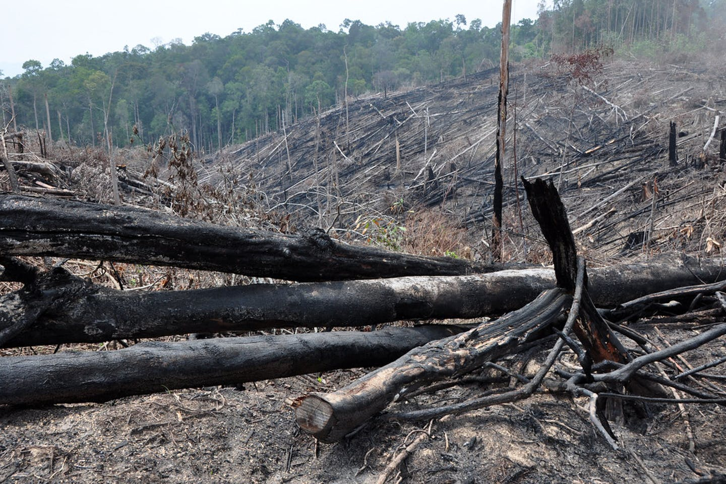 illegal land clearing indonesia