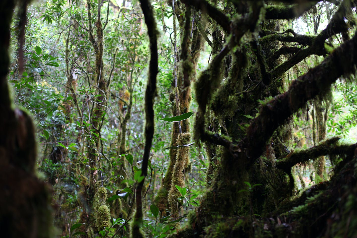 mossy forest indonesia