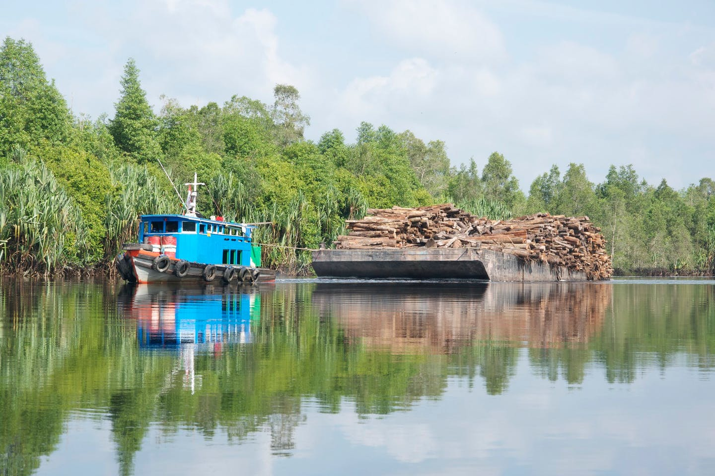 hauling timber from Indonesian peat forest