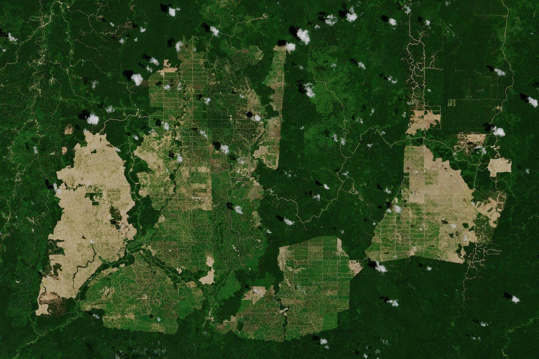 palm oil satellite photo