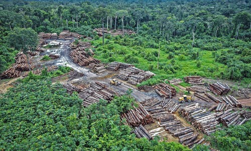 Getting to zero deforestation in the Amazon by 2030