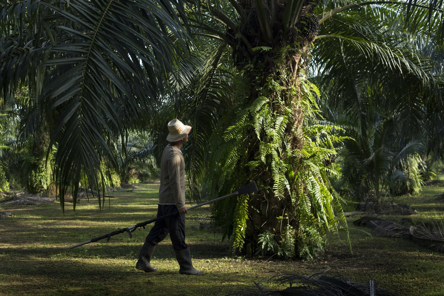 Pioneering sustainable palm oil in India.