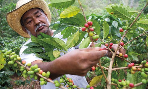 Coffee farmers in dire straits; large roasters and traders must step up: Report
