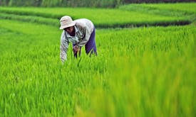 Indonesia's food estate programme to expand new plantations in forest frontiers