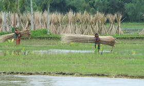 Amidst food system shocks, we must ensure weather index insurance reaches the most vulnerable